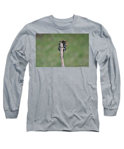 Long Sleeve T-Shirt featuring the photograph The Posing Beetle by Verana Stark