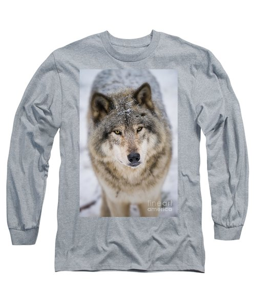 Timber Wolf Pictures 254 Long Sleeve T-Shirt