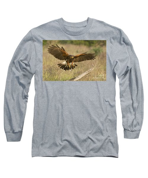 Wild Harris Hawk Landing Long Sleeve T-Shirt by Dave Welling