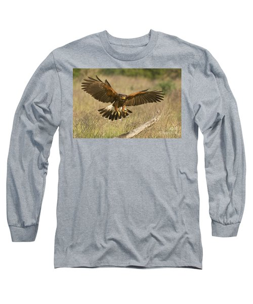 Wild Harris Hawk Landing Long Sleeve T-Shirt