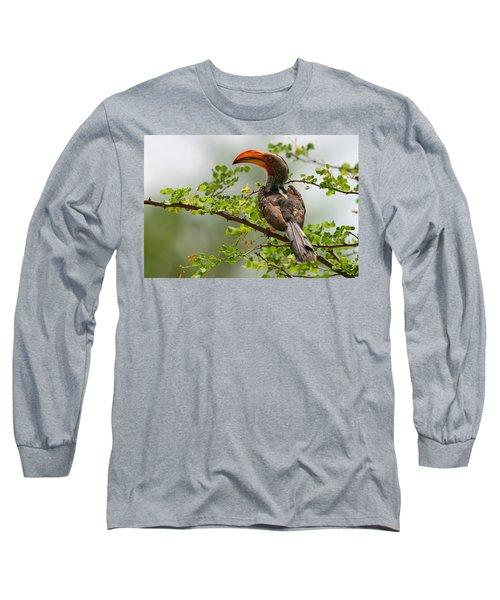 Yellow-billed Hornbill Long Sleeve T-Shirt by Bruce J Robinson