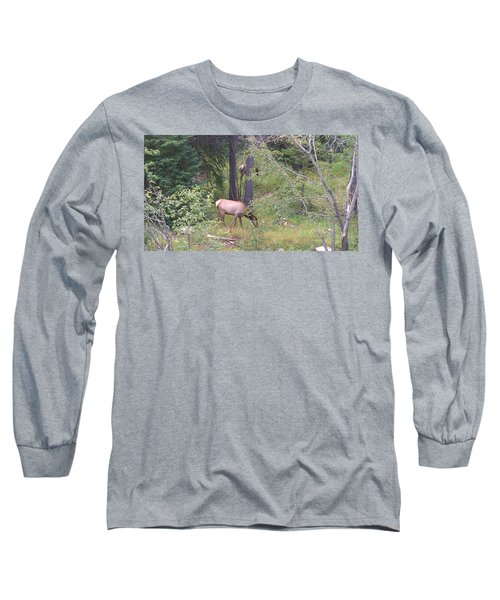 Long Sleeve T-Shirt featuring the photograph Young Elk Grazing by Fortunate Findings Shirley Dickerson