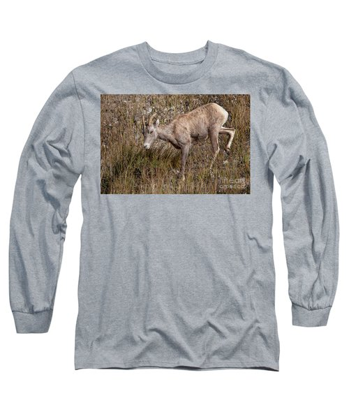 Bighorn Ewe Long Sleeve T-Shirt by Ronald Lutz