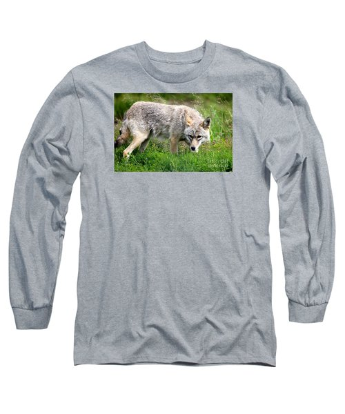 Long Sleeve T-Shirt featuring the photograph Coyote On The Prowl by Kathy  White