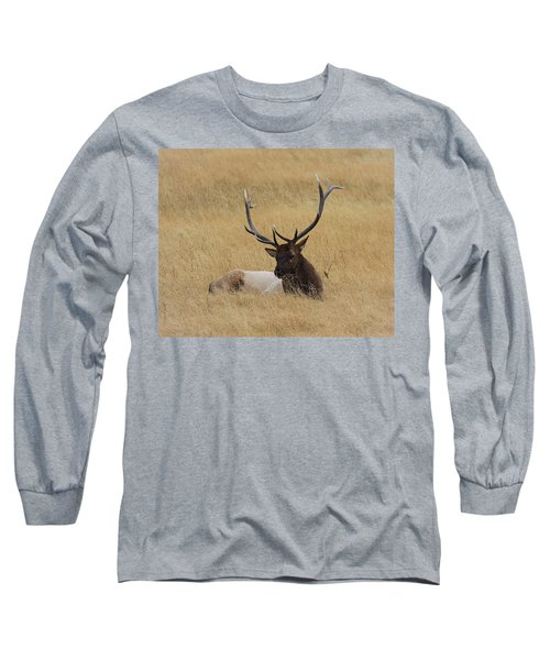 Long Sleeve T-Shirt featuring the photograph Elk In The Meadow by Steve McKinzie