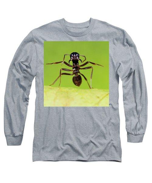 Japanese Slave-making Ant Polyergus Long Sleeve T-Shirt by Satoshi Kuribayashi