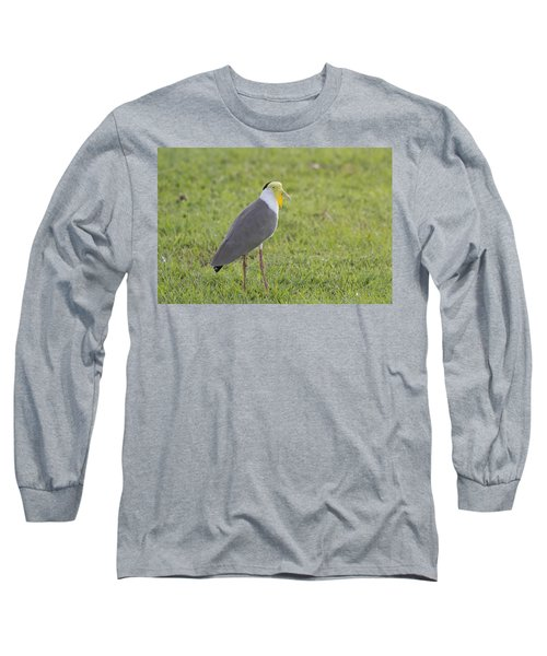 Masked Lapwing Long Sleeve T-Shirt by Douglas Barnard