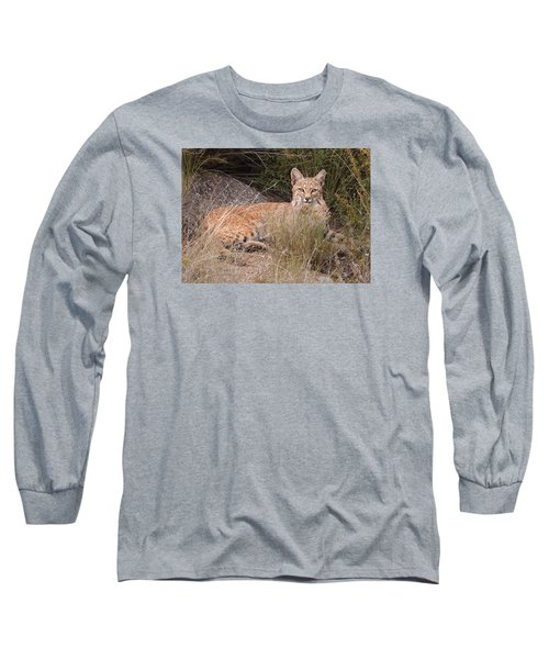 Bobcat At Rest Long Sleeve T-Shirt by Alan Toepfer