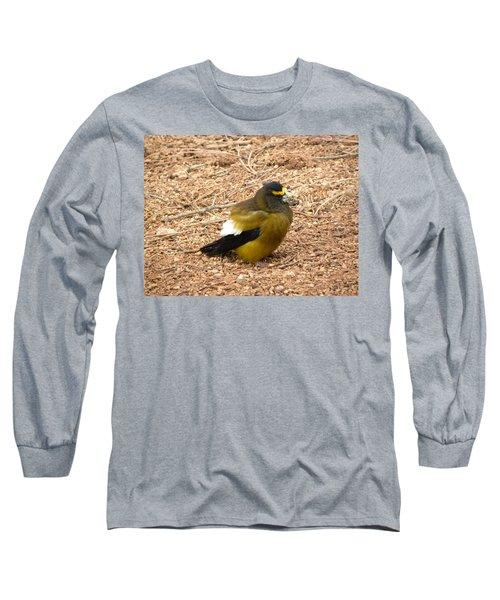 Evening Grossbeak Divide Co Long Sleeve T-Shirt