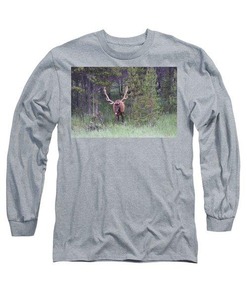 Bull Elk Rocky Mountain Np Co Long Sleeve T-Shirt