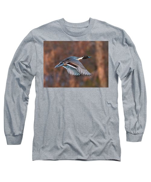 Long Sleeve T-Shirt featuring the photograph Pintail  by Kelly Marquardt