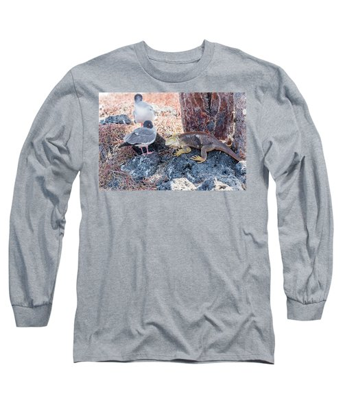 Swallow Tailed Gull And Iguana On  Galapagos Islands Long Sleeve T-Shirt by Marek Poplawski