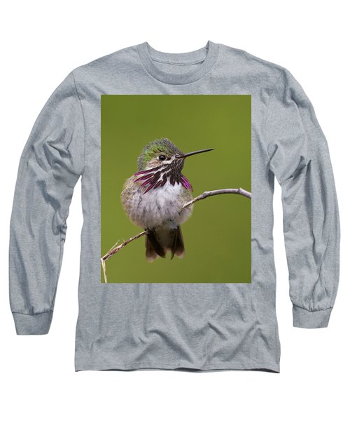 Calliope Hummingbird Long Sleeve T-Shirt by Doug Herr