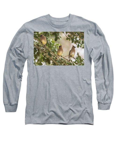 3 Cedar Waxwings  Long Sleeve T-Shirt