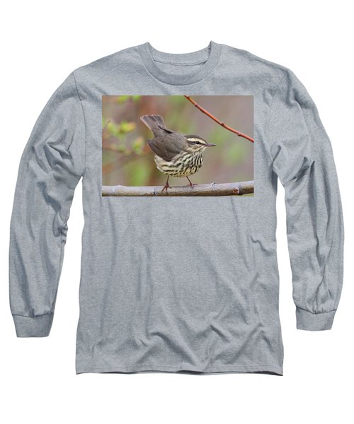 Northern Waterthrush Long Sleeve T-Shirt
