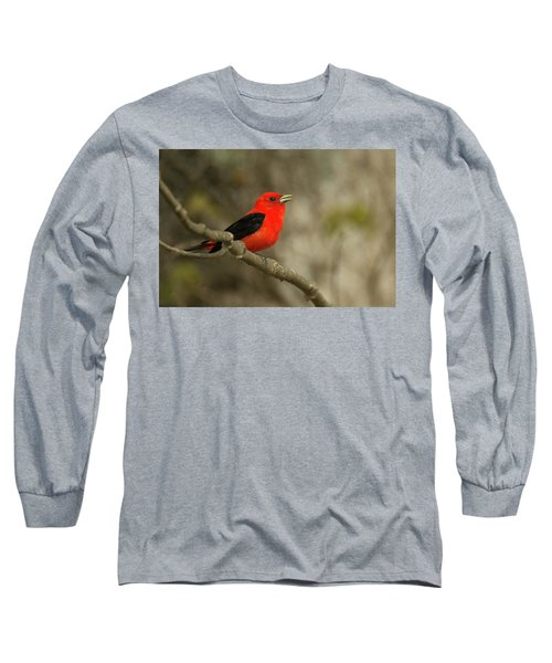 Scarlet Tanager Long Sleeve T-Shirt by Alan Lenk