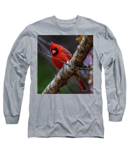 A Cardinal In Spring   Long Sleeve T-Shirt