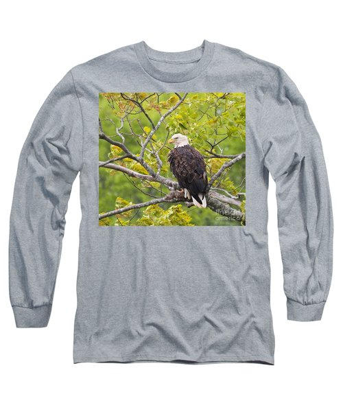 Adult Bald Eagle Long Sleeve T-Shirt by Debbie Stahre