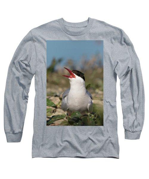 Arctic Tern - St John's Pool, Scotland Long Sleeve T-Shirt