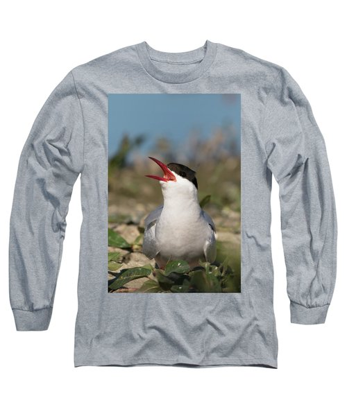 Long Sleeve T-Shirt featuring the photograph Arctic Tern - St John's Pool, Scotland by Karen Van Der Zijden