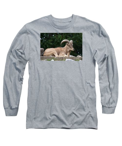 Long Sleeve T-Shirt featuring the photograph Auodad 20120714_80a by Tina Hopkins