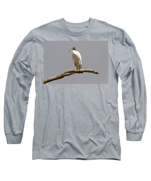 Australian White Ibis Perched Long Sleeve T-Shirt
