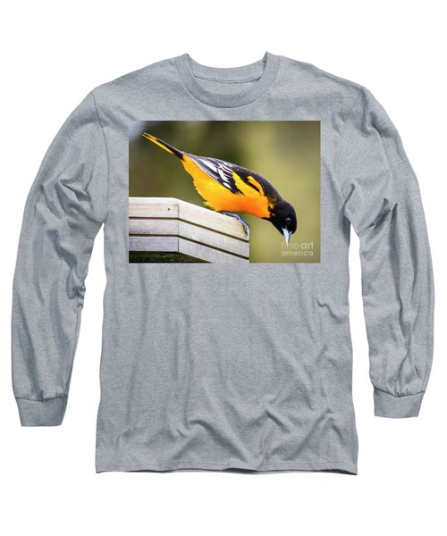 Long Sleeve T-Shirt featuring the photograph Baltimore Oriole About To Jump by Ricky L Jones