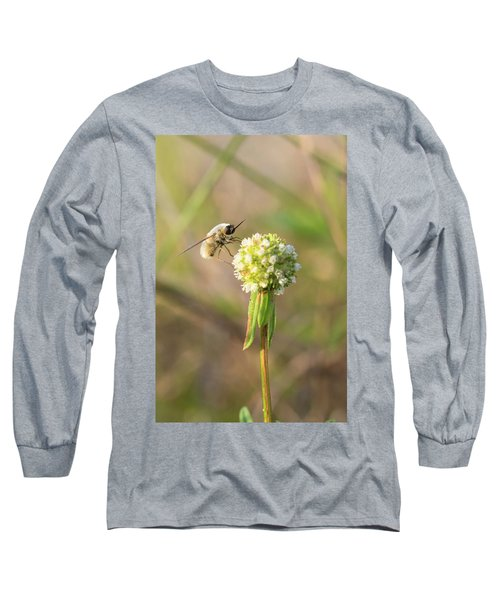 Bee Fly On A Wildflower Long Sleeve T-Shirt by Christopher L Thomley