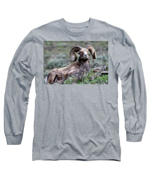 Long Sleeve T-Shirt featuring the photograph Big Horn Sheep #3 by Scott Read