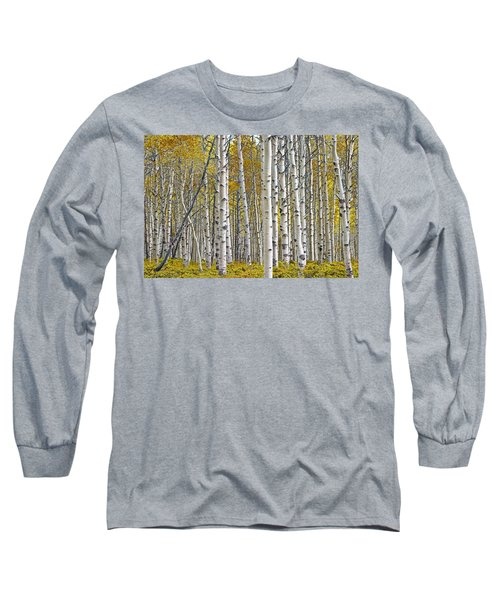 Birch Tree Grove With A Touch Of Yellow Color Long Sleeve T-Shirt