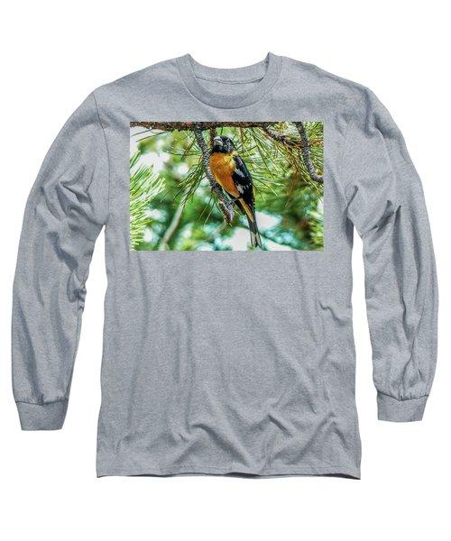 Black-headed Grosbeak On Pine Tree Long Sleeve T-Shirt by Marilyn Burton