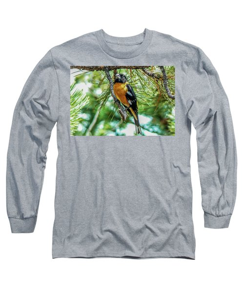 Black-headed Grosbeak On Pine Tree Long Sleeve T-Shirt