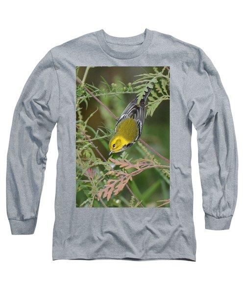 Black-throated Green Intent Long Sleeve T-Shirt by Alan Lenk