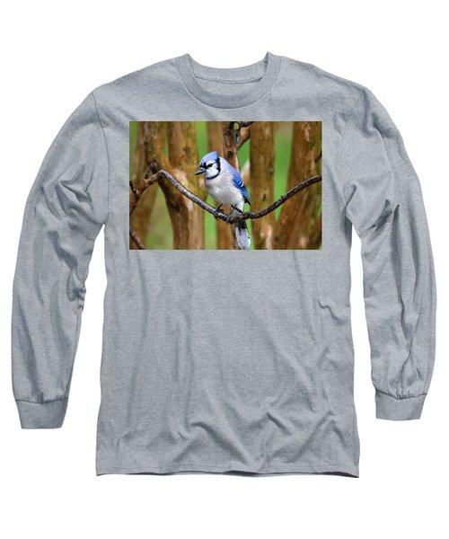 Blue Jay On A Branch Long Sleeve T-Shirt