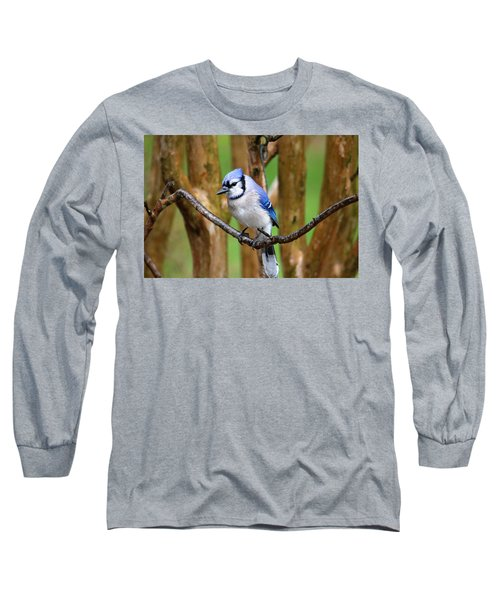 Blue Jay On A Branch Long Sleeve T-Shirt