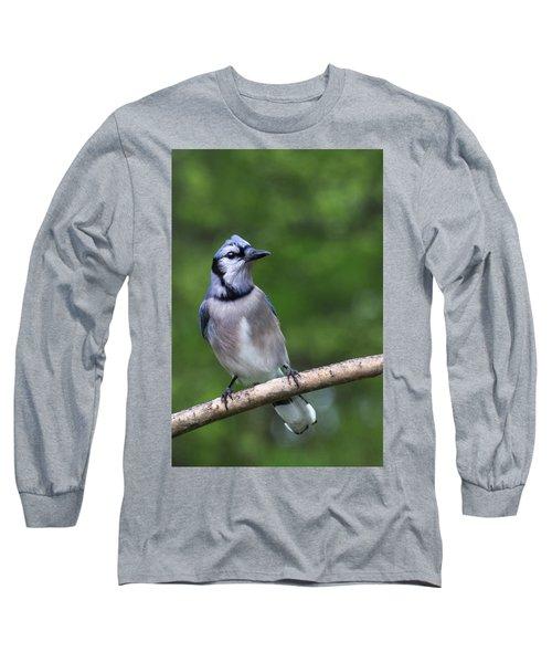 Blue Jay On Alert Long Sleeve T-Shirt