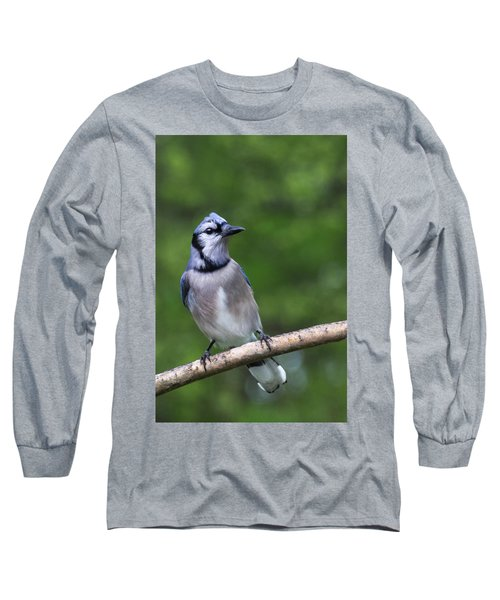 Blue Jay On Alert Long Sleeve T-Shirt
