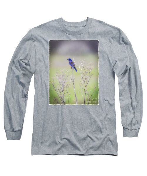 Bluebird On Hemlock Long Sleeve T-Shirt by Mitch Shindelbower