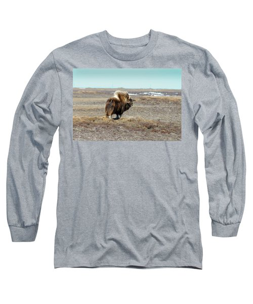 Bull Musk Ox Long Sleeve T-Shirt