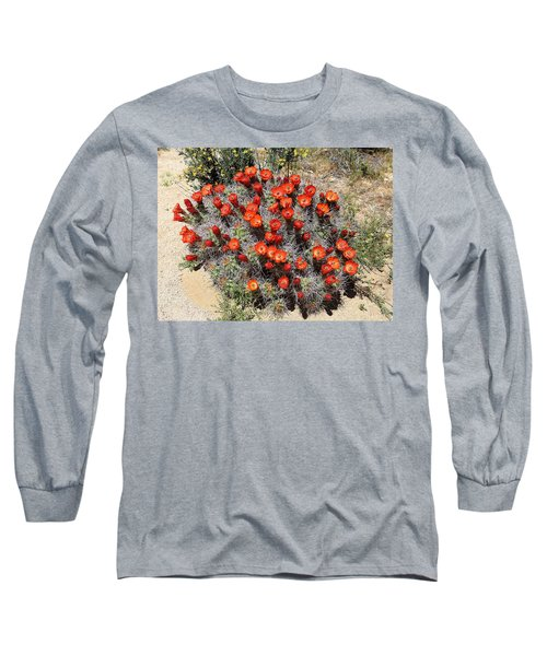 Long Sleeve T-Shirt featuring the photograph Cactus Bloom In Jtnp by Viktor Savchenko