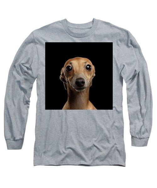 Closeup Portrait Italian Greyhound Dog Looking In Camera Isolated Black Long Sleeve T-Shirt by Sergey Taran