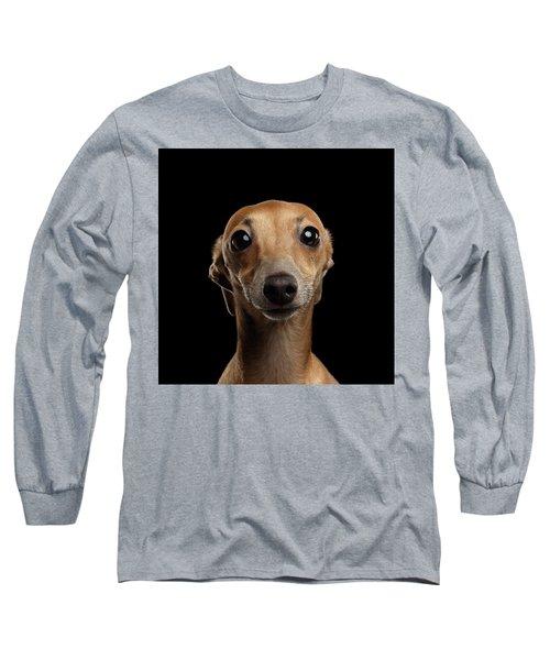 Closeup Portrait Italian Greyhound Dog Looking In Camera Isolated Black Long Sleeve T-Shirt