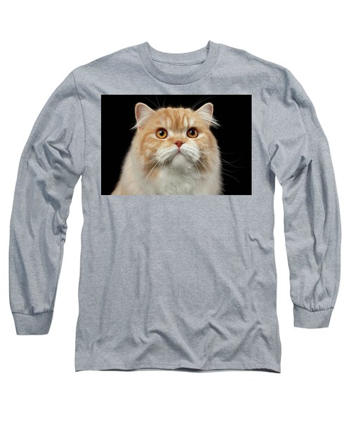 Closeup Portrait Of Red Big Persian Cat Angry Looking On Black Long Sleeve T-Shirt