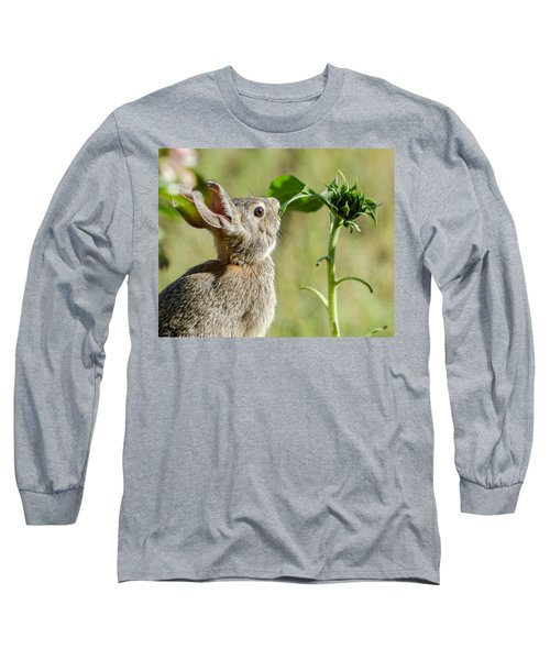 Cottontail Rabbit Eating A Sunflower Leaf Long Sleeve T-Shirt by John Brink