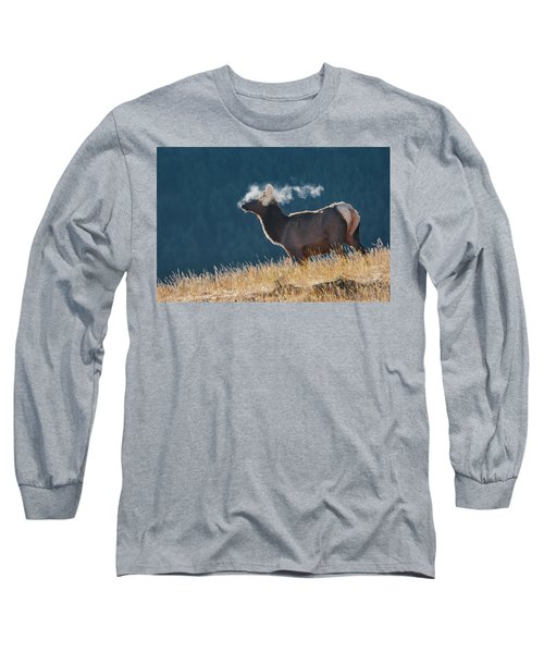 Cow Elk With Steamy Breath Long Sleeve T-Shirt