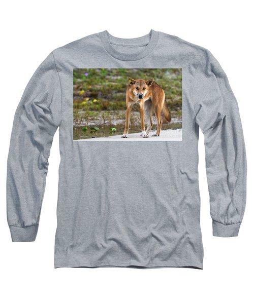 Dingo On 75 Mile Beach, Long Sleeve T-Shirt