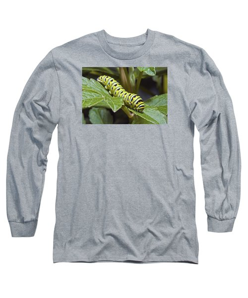 Eastern Black Swallowtail Caterpillar IIi Long Sleeve T-Shirt by Michael Peychich