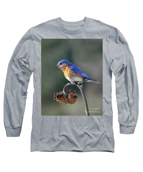 Eastern Bluebird In Spring Long Sleeve T-Shirt by Amy Porter