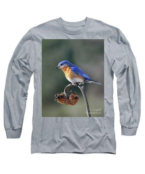 Eastern Bluebird In Spring Long Sleeve T-Shirt