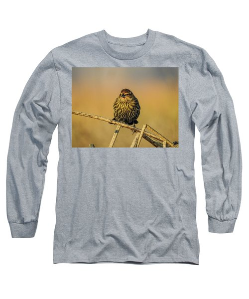 Female Red-winged Blackbird  Long Sleeve T-Shirt
